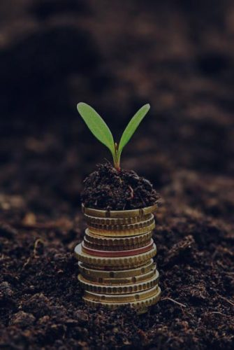 mianzo-planting-assets-growth